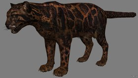 Shadow Leopard